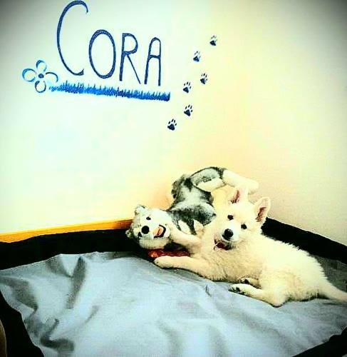 Cora hat ein eigenes Platzerl