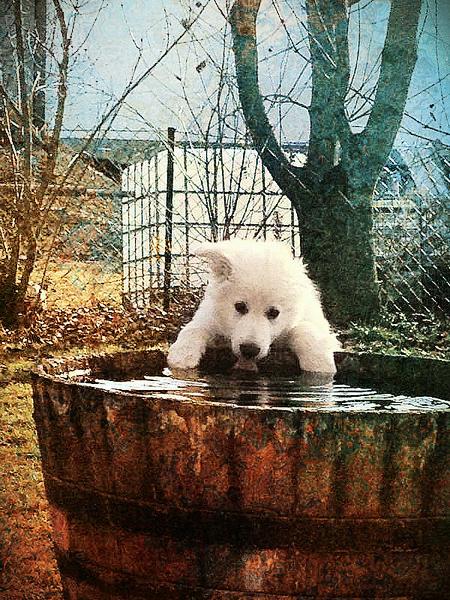 Mika hat die größte Wasserschüssel