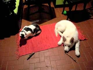 Nelly und Katzo_1_1