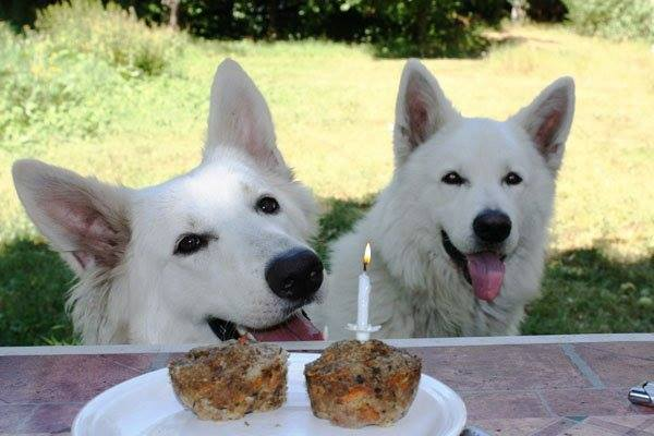 geburtstags-fleisch-muffin